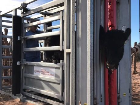 Productores bovinos pueden acceder a equipamiento para inseminación artificial