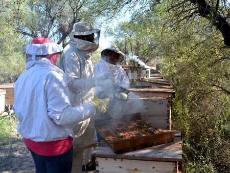 Ambiente y comunidades originarias realizaron la cuarta cosecha de miel