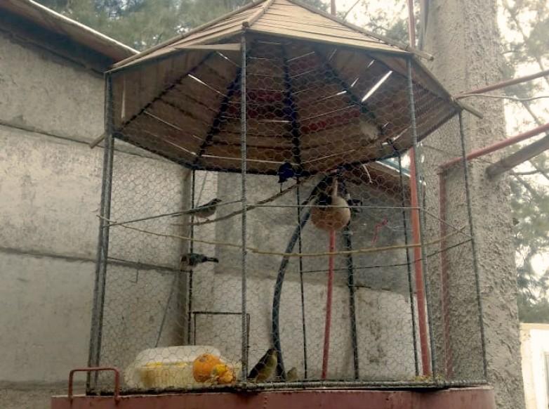 Ambiente rescató 31 aves en un allanamiento