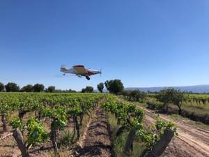 Las aplicaciones aéreas para combatir Lobesia botrana llegan a Sarmiento y 25 de Mayo