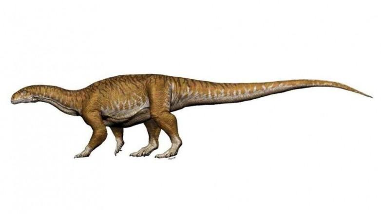 Llaman a concurso para desarrollar una aplicación sobre el dinosaurio Ingentia prima