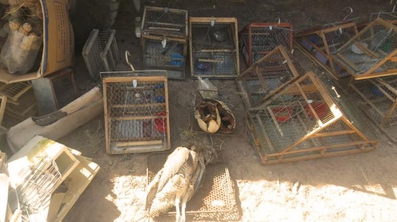 Diez infracciones fueron labradas durante un operativo de conservación