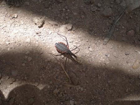 Salud realizará un operativo de testeo de Chagas en Mogna