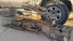 En operativo de fauna fueron decomisadas aves y jaulas