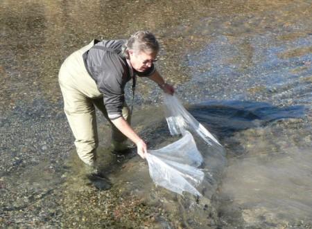 Ambiente buscará recuperar Los Cauquenes como recurso pesquero