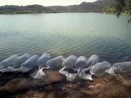 Ambiente sembró 3 mil sogyos en el dique San Agustín
