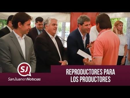 Reproductores para los productores | #SanJuanEnNoticias