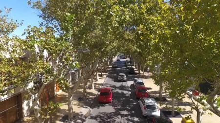 29 de agosto: un día para tomar conciencia sobre la importancia de los árboles