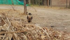 Ambiente rescató un halcón impedido de volar