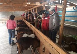Productores caprinos participaron de un encuentro binacional en Chile
