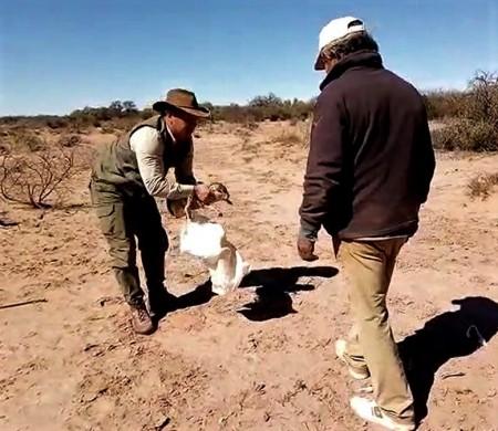 Ambiente liberó una liebre criolla rescatada en un operativo de conservación