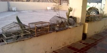 En procedimientos de conservación fueron rescatadas 10 aves y una liebre
